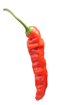 Aji Ahuachapan pepper (Capsicum baccatum), whole pod. Clipping path Stock Photo