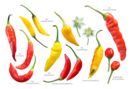 Aji chile peppers (Capsicum baccatum) collection. Clipping paths for each Stock Photo