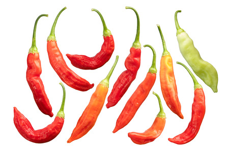 Aji Wundertute peppers (Capsicum baccatum), whole pods. Stock Photo