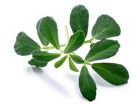 Fenugreek (Trigonella foenum-graecum) leaves . Clipping paths, shadow separated
