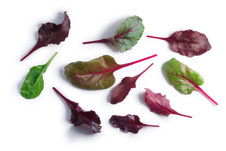 Leaves of baby Swiss chard or Mangold (Beta vulgaris subsp. Cicla-Group). Clipping paths, shadows separated, top view Stock Photo