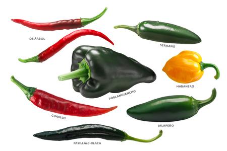 Mexican chile peppers: Arbol, Pasilla, Guajillo, Poblano, Habanero, Jalapeno. 스톡 콘텐츠