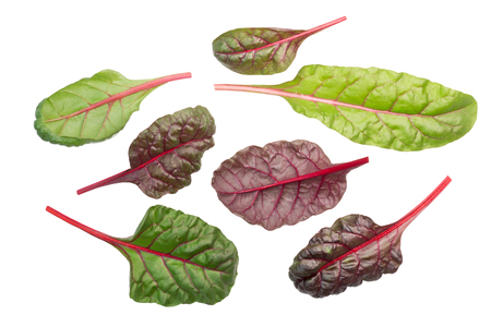 Swiss chard, silverbeet or mangold leaves (Beta vulgaris subsp. Cicla-group), top view