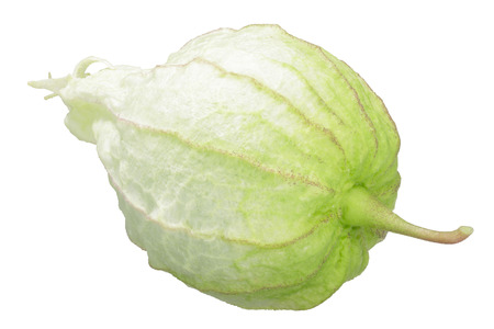 Tomatillo or Mexican husk tomato (Physalis philadelphica fruit) in its own husk
