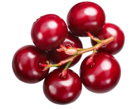 Cluster of Lingonberries (fruits of Vaccinium vitis-idaea), top view