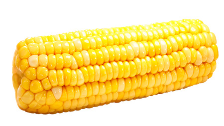 Corn on cob (Zea mays), or whole maize ear isolated 写真素材