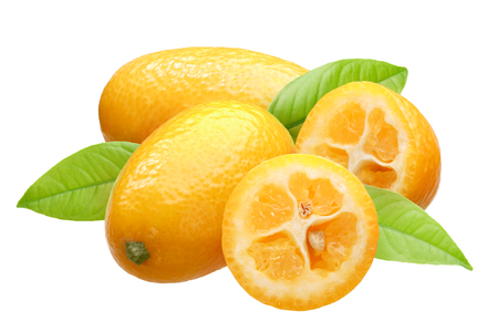 Kumquats (Citrus japonica fruits) group of four with leaves Standard-Bild