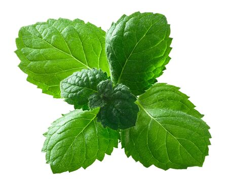 Peppermint or mint leaves (Mentha piperita) isolated on white Stockfoto
