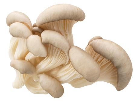 Oesterzwammen (Pleurotus ostreatus), een eetbare gekweekte paddestoel, geïsoleerd,