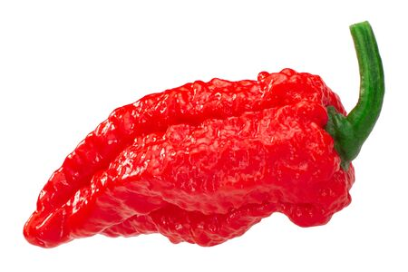 Fatalii chile pepper (Capsicum chinense), whole ripe pod, isolated 免版税图像