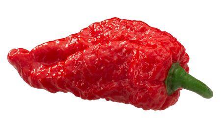 Fatalii pepper (Capsicum chinense fruits), wrinkled whole pod, isolated Zdjęcie Seryjne