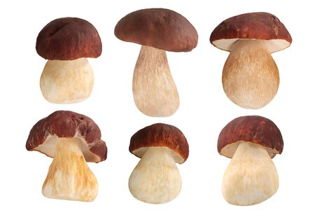 Ceps or Porcini mushrooms (Boletues edulis fruit bodies), isolated