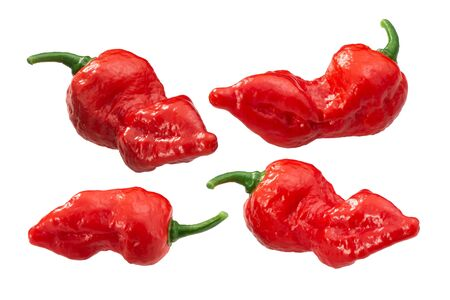 Fatalii peppers (Capsicum chinense fruits), smooth-skinned whole pods, isolated Zdjęcie Seryjne