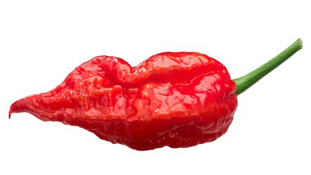 Ghost chile pepper Bhut Jolokia (Capsicum frutescens x Capsicum chinense), long pod,  isolated 版權商用圖片