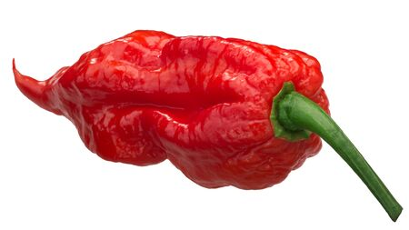 Ghost chile pepper Bhut Jolokia (Capsicum frutescens x Capsicum chinense), long pod,  isolated Zdjęcie Seryjne