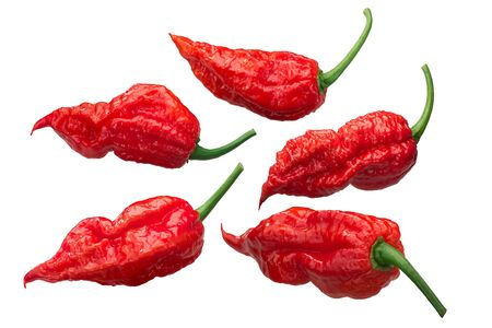 Ghost chile peppers Bhut Jolokia (Capsicum frutescens x Capsicum chinense), long pods,  isolated