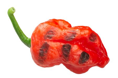 Grilled or fire roasted Habanero chile pepper, whole pod