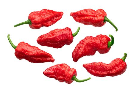 Fatalii peppers (Capsicum chinense fruits), wrinkled whole pods, isolated, a set of Zdjęcie Seryjne