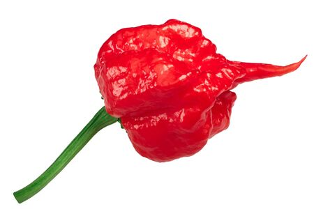 Carolina Reaper, the hottest chile pepper (Capsicum chinense fruit), whole ripe pod, isolated