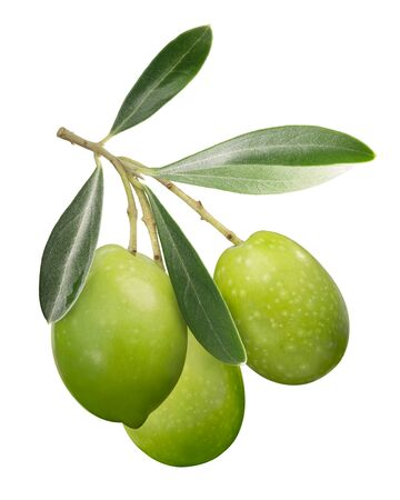Three green olives on branch with leaves (Olea europaea fruits), isolated