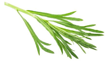 French Tarragon (Artemisia dracunculus) sprig, isolated, top view
