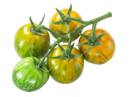Green Zebra heirloom tomatoes on the vine cluster, isolated