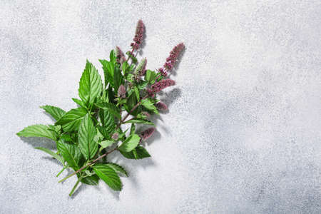 Flowering Spearmint (Mentha spicata) on grey textured backdrop w/copy space, top view