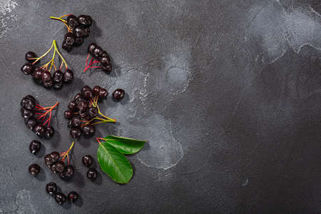 Black chokeberry (Aronia melanocarpa) berries atop dark textured backdrop w/ copy space, top view