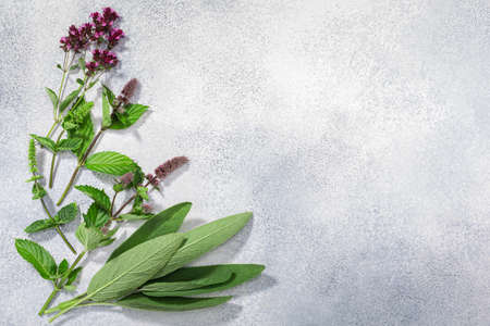 Fresh medicinal herbs: sage, mint, oregano on grey textured backdrop w/ copy space, top view