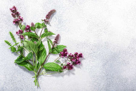 Flowering Spearmint, peppermint and oregano on grey textured backdrop w/copy space, top view