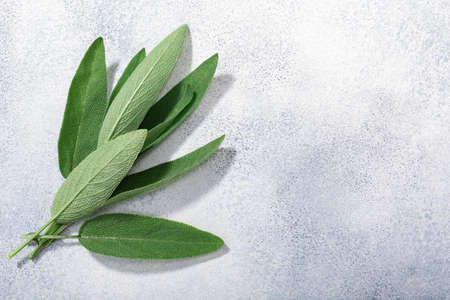 Sage leaves (Salvia officinalis) on grey textured backdrop w/ copy space, top view