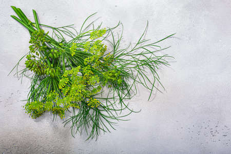 Fresh Dill (Anethum graveolens) leaves, florets, fruits atop grey textured backdrop w/ copy space, top view