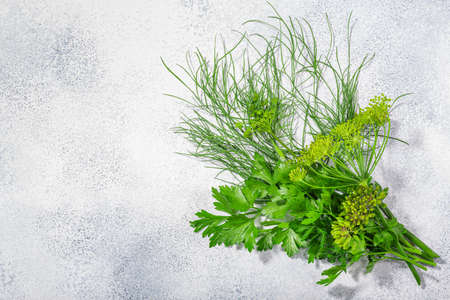 Fresh Dill  and Parsley leaves, florets, fruits atop grey textured backdrop w/ copy space, top view