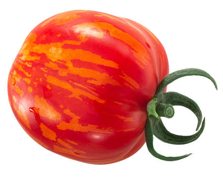 Striped Stuffer heirloom tomato, whole fruit, isolated