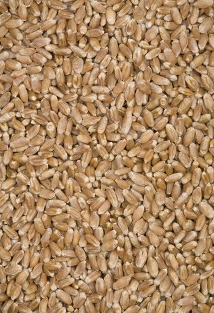 Background with a considerable quantity of wheat grains.