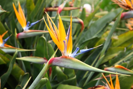 Exotic flowers on Canary Islands