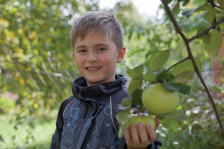 gather: Smiling boy chose an apple and ready to gather it Stock Photo