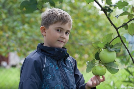 chose: Boy chose an apple and ready to gather it