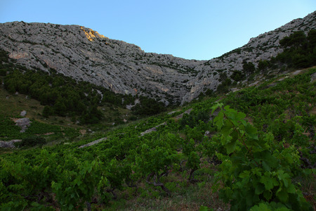 rural economy: Vineyard against rocks on the island Hvar, Croatia.