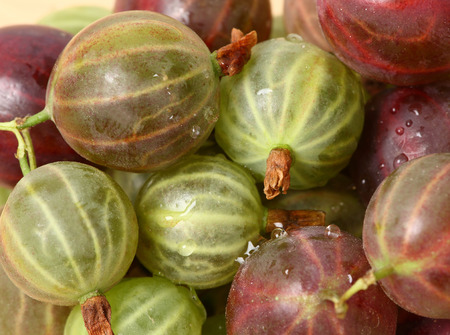 Background with a ripe gooseberry, a close up