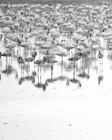 roosting: Flamingos Stock Photo