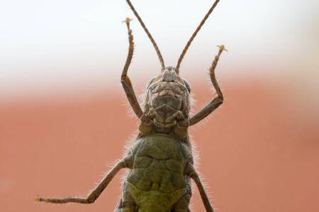 Grasshopper sitting on a glass