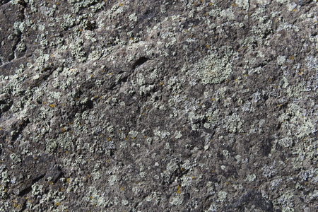 lichen on the old stone surface