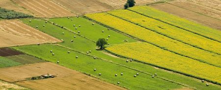 cultivated fields, cereals, wheat photo