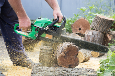 cutting: Felling firewood to the winter