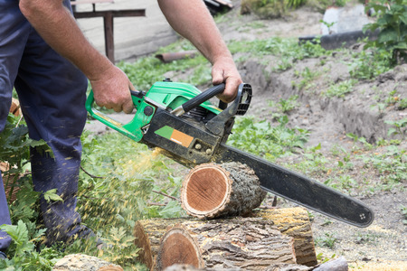 cutting: Preparation of firewood for the winter