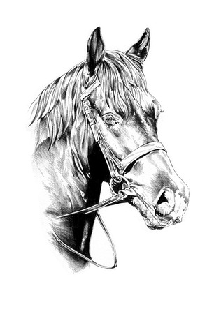 Cheval crayon de dessin tête Banque d'images - 32343935