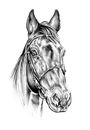 Dibujo a lápiz de la cabeza de caballo Foto de archivo - 32343956