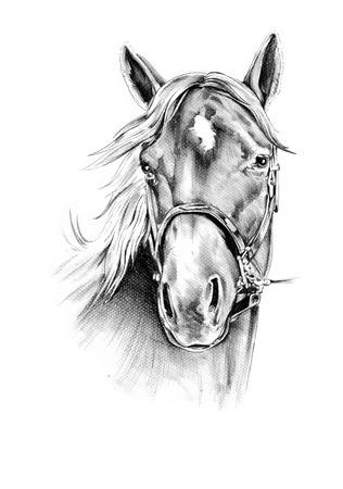 馬の頭部の鉛筆画