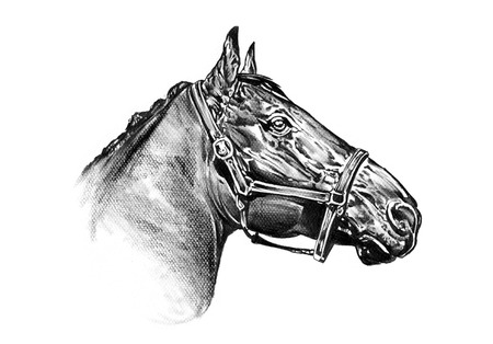 horse head pencil drawing photo